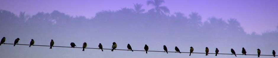 birdsonawire2